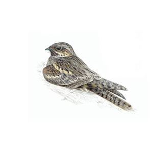 100 Pics Quiz Birds Pack Level 8 Answer 1 of 5