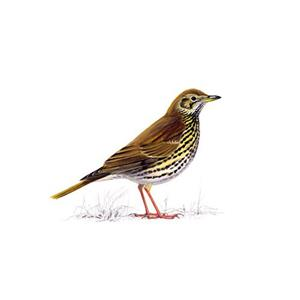 100 Pics Quiz Birds Pack Level 9 Answer 1 of 5