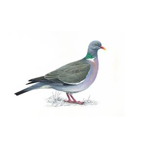 100 Pics Quiz Birds Pack Level 2 Answer 1 of 5