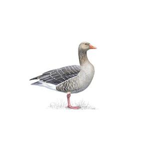 100 Pics Quiz Birds Pack Level 11 Answer 1 of 5