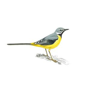 100 Pics Quiz Birds Pack Level 12 Answer 1 of 5