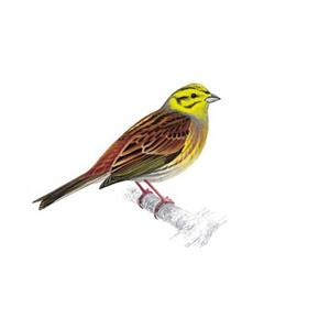 100 Pics Quiz Birds Pack Level 13 Answer 1 of 5