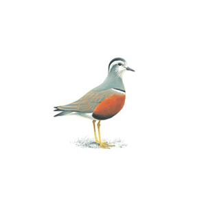 100 Pics Quiz Birds Pack Level 14 Answer 1 of 5