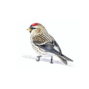 100 Pics Quiz Birds Pack Level 17 Answer 1 of 5