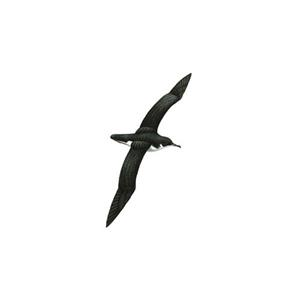 100 Pics Quiz Birds Pack Level 19 Answer 1 of 5