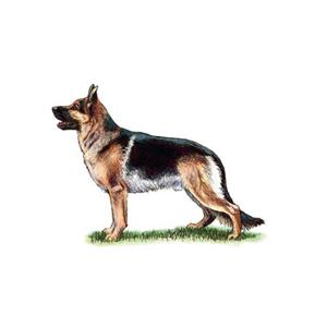 100 Pics Quiz Dog Breeds Pack Level 3 Answer 1 of 5