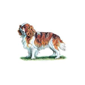 100 Pics Quiz Dog Breeds Pack Level 4 Answer 1 of 5