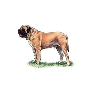 100 Pics Quiz Dog Breeds Pack Level 6 Answer 1 of 5