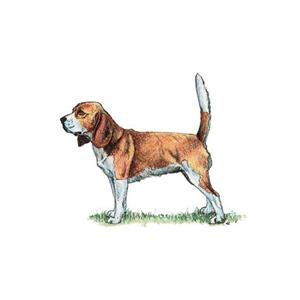 100 Pics Quiz Dog Breeds Pack Level 8 Answer 1 of 5