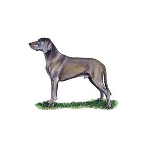100 Pics Quiz Dog Breeds Pack Level 9 Answer 1 of 5