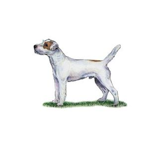 100 Pics Quiz Dog Breeds Pack Level 10 Answer 1 of 5