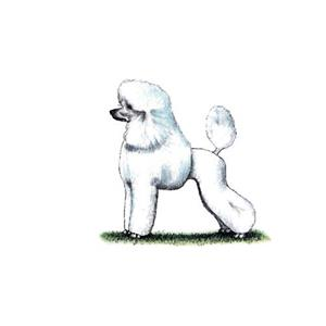 100 Pics Quiz Dog Breeds Pack Level 11 Answer 1 of 5