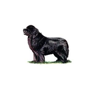 100 Pics Quiz Dog Breeds Pack Level 12 Answer 1 of 5