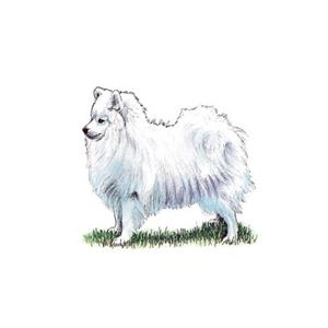 100 Pics Quiz Dog Breeds Pack Level 13 Answer 1 of 5