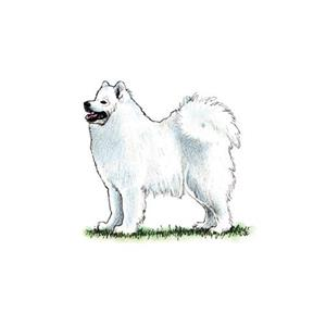 100 Pics Quiz Dog Breeds Pack Level 14 Answer 1 of 5