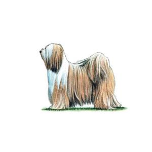 100 Pics Quiz Dog Breeds Pack Level 15 Answer 1 of 5