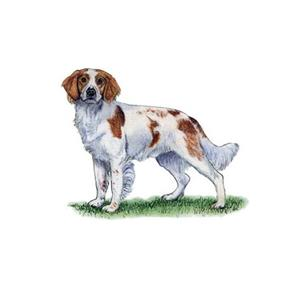 100 Pics Quiz Dog Breeds Pack Level 17 Answer 1 of 5