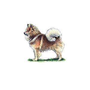 100 Pics Quiz Dog Breeds Pack Level 18 Answer 1 of 5