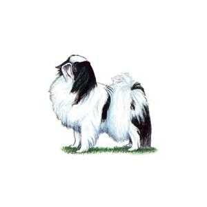 100 Pics Quiz Dog Breeds Pack Level 19 Answer 1 of 5