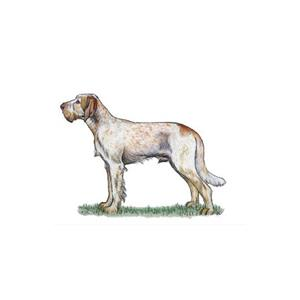 100 Pics Quiz Dog Breeds Pack Level 20 Answer 1 of 5
