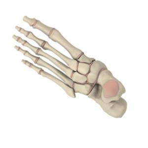 100 Pics Quiz Body Parts Pack Level 20 Answer 1 of 5