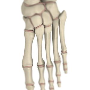 100 Pics Quiz Body Parts Pack Level 19 Answer 1 of 5