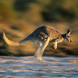 100 Pics Quiz I Love Australia Pack Level 2 Answer 1 of 5