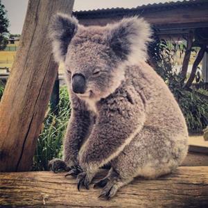 100 Pics Quiz I Love Australia Pack Level 1 Answer 1 of 5