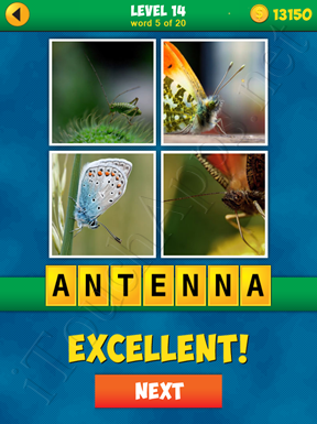 4 Pics 1 Word Puzzle - More Words - Level 14 Word 5 Solution
