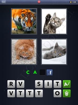 4 Pics 1 Word Level 1066 Solution