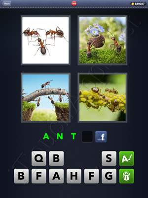 4 Pics 1 Word Level 1448 Solution