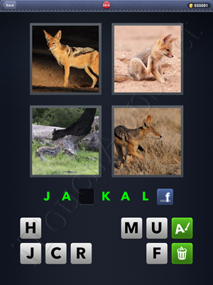 4 Pics 1 Word Level 2414 Solution