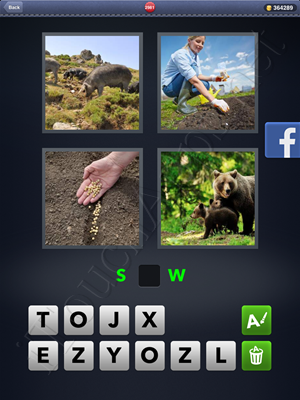 4 Pics 1 Word Level 2981 Solution