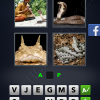 4 Pics 1 Word Answers: Level 2906