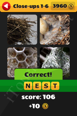 What's That Word Close-ups Level 1-6 Solution