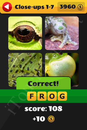 What's That Word Close-ups Level 1-7 Solution