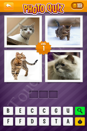 Photo Quiz Easy Pack Level 1 Solution