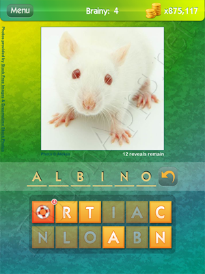 What's the Pic Brainy Level 4 Solution